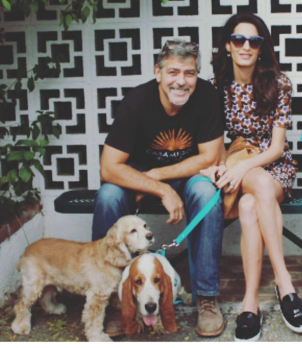 clooneys-and-the-dogs